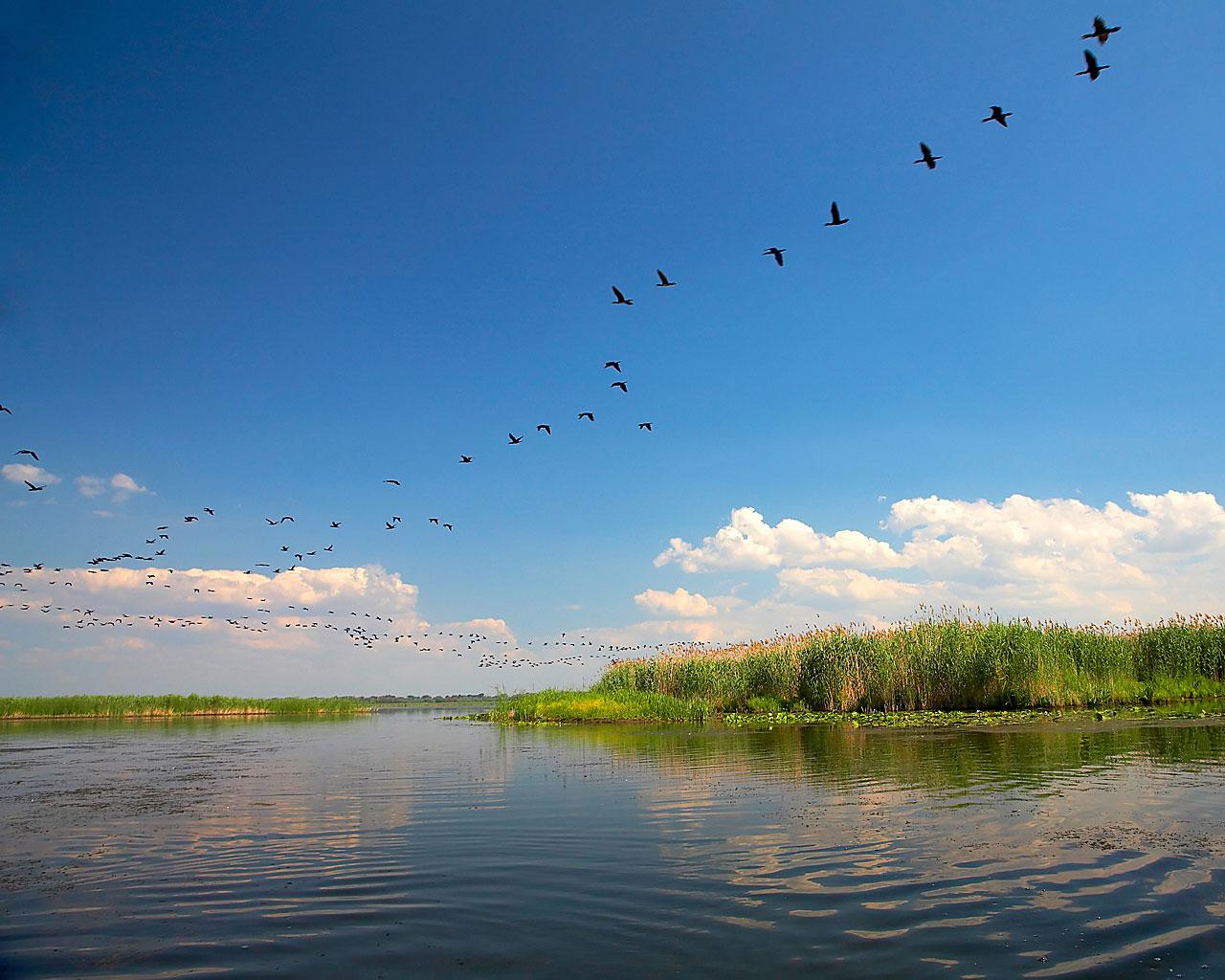 dunarea, delta