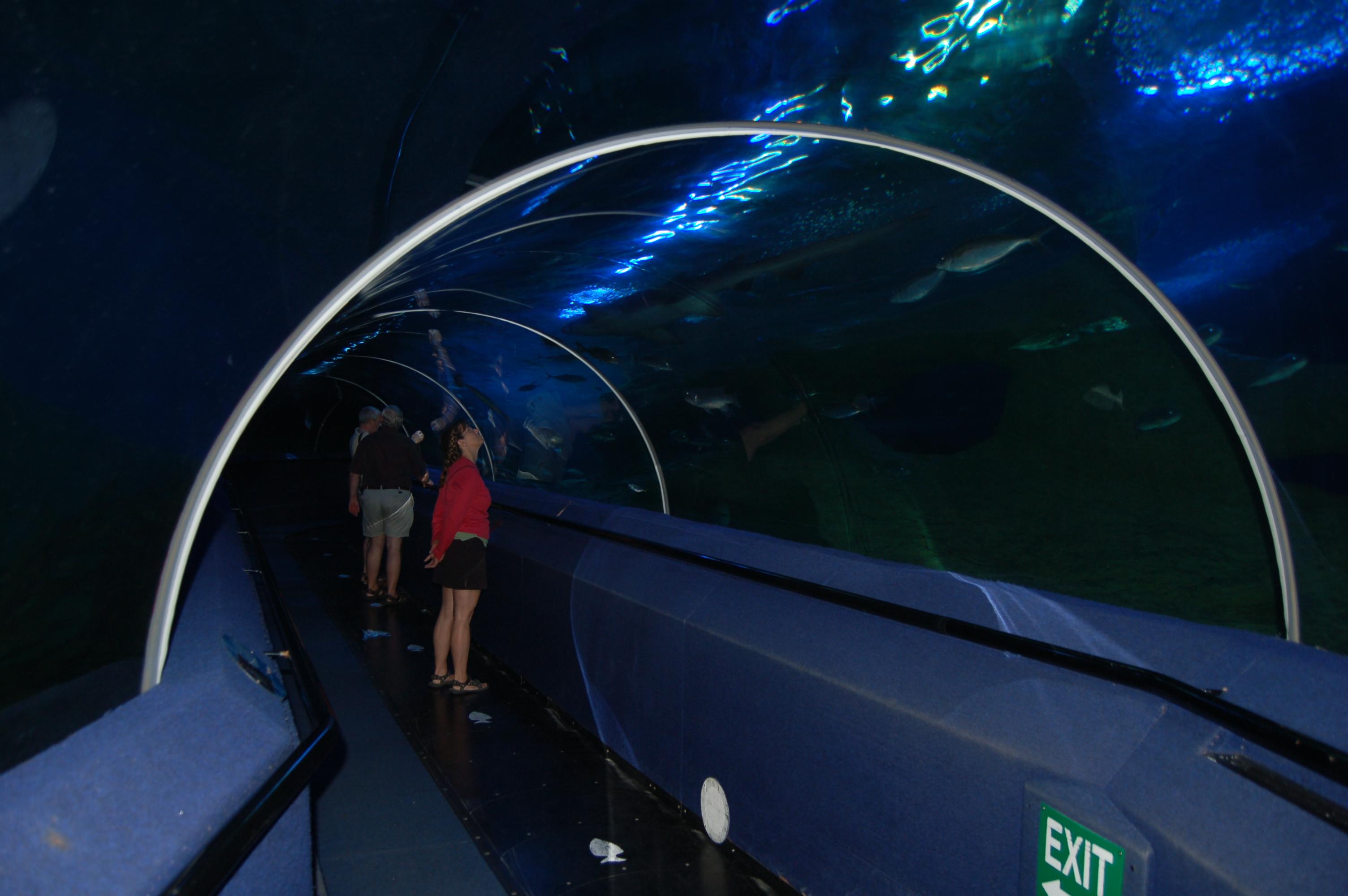 Acvariul Australiei de Vest, tunelul de sticlă pe sub apă
