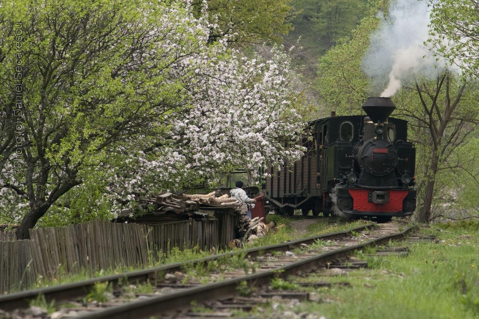 Mocănița de la Vișeul de Sus, a venit (cu) primăvara