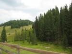 Turistii intalnesc la fiecare pas paduri de conifere