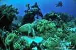Thubbataha Reef, locul ideal pentru scufundări