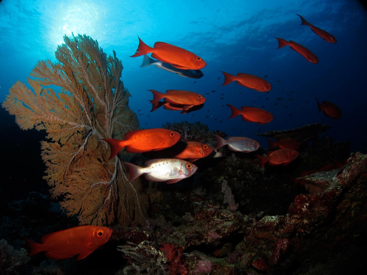 Bogăția oceanului descoperită scufundătorilor