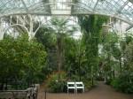 O grădină exotică la zoo în Viena