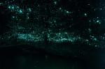 Peștera Waitomo, raiul licuricilor