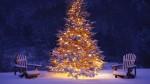 Pomul de Crăciun încărcat de zăpadă crează o imagine splendidă!