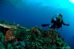 Tubbataha Reef, locul ideal pentru scufundări