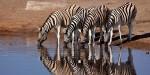 Animalele se află într-o armonie perfectă cu natura