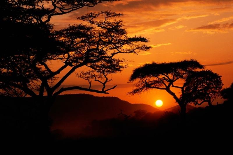 Cele mai fioroase animale sunt la tot pasul în Serengeti