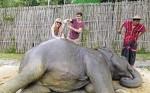 Vei putea mângâia elefanți și alte animale ce trăiesc în Parcul National Khao