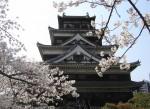 Florile de cireș în fața Castelului Hiroshima, o reconstrucție a celui distrus la finele Războiului