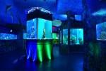 SeaWorld Praga - un obiectiv turistic care atrage anual 80.000 de turiști în Praga