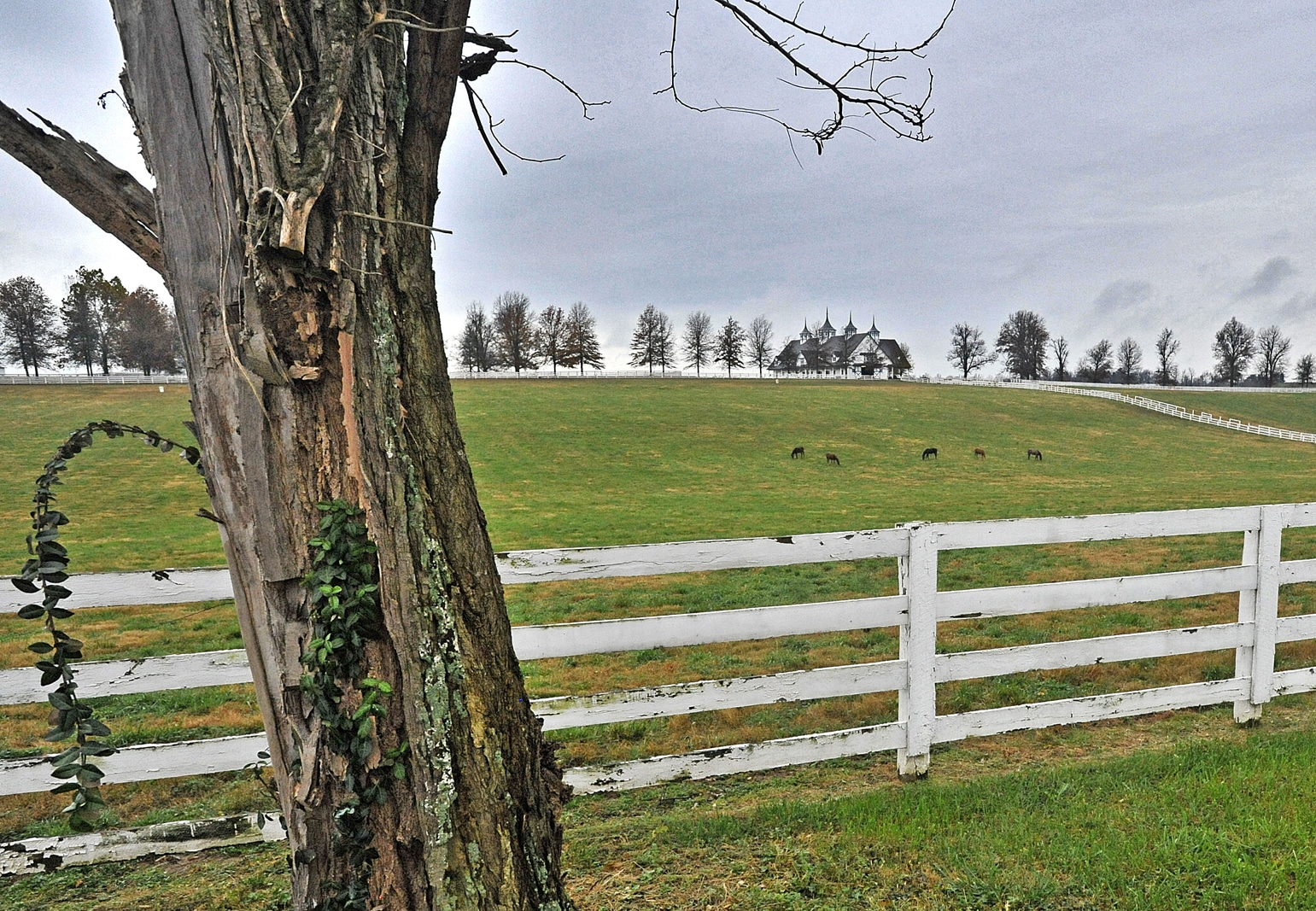 Peisaj rural din Kentucky
