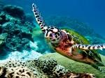 Insula Juventud este ideală pentru scufundări