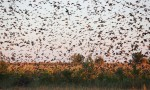 Sute de specii de păsări sunt găzduite de Delta Dunării