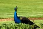 În Islamabad există chiar și parcuri ce adăpostesc diverse specii de păsări