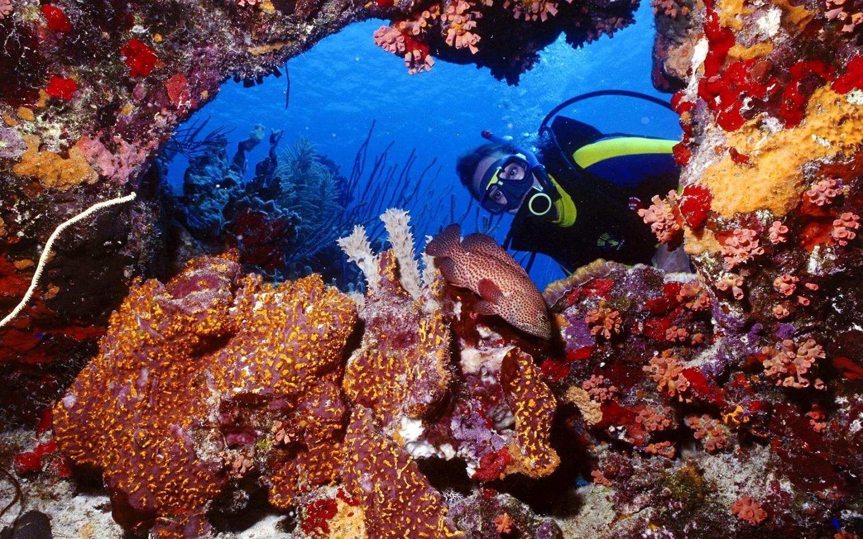 Insulele Palau sunt ca niște creste acoperite de vegetație