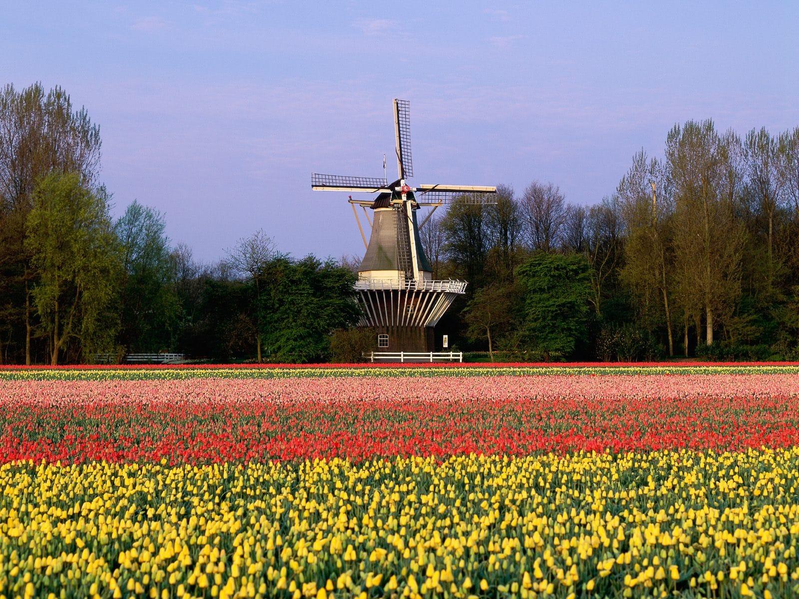 Aleile colorate atrag anual sute de mii de vizitatori