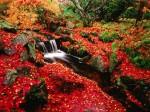Beacon Hill Park, locul cu peisaje luxuriante