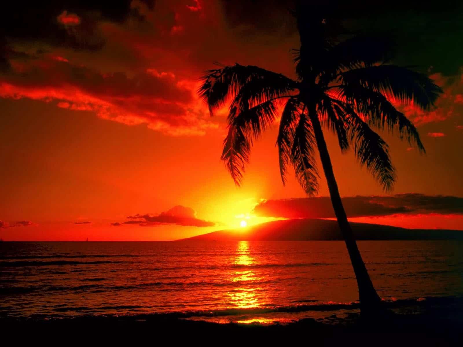Insula Maui, un teritoriu de vis!