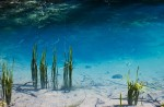 Lacul Ochiul Beiului se remarcă şi prin transparenţa apelor