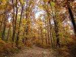 Pădurile din jur, locuri ideale pentru drumeţii