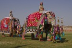 Paradele cu elefanţi sunt cele mai apreciate evenimente din Jaipur