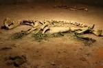 Resturile scheletice ale urşilor, o curiozitate pentru turişti