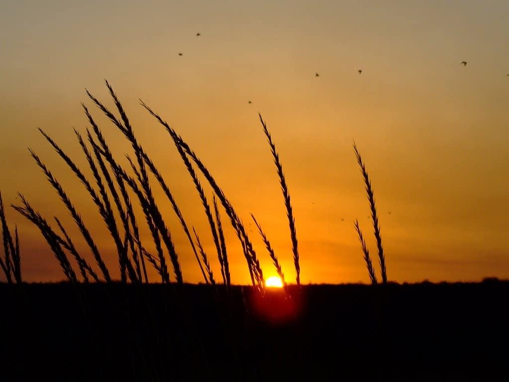 Apusul învăluie orizontul într-o lumină aurie