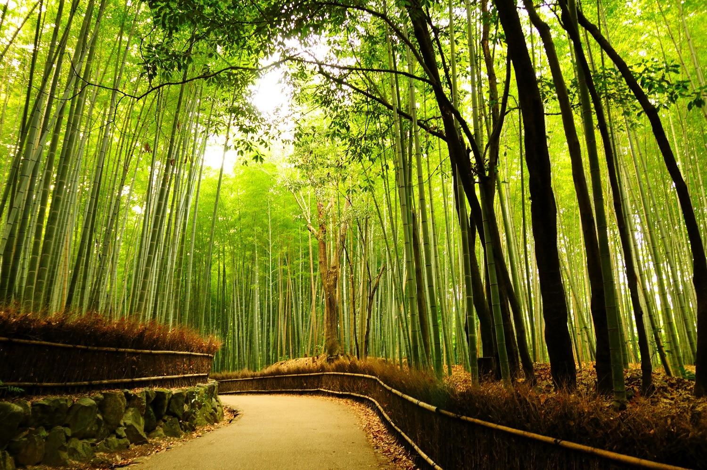 Pădurea de bambuşi Sagano, Japonia