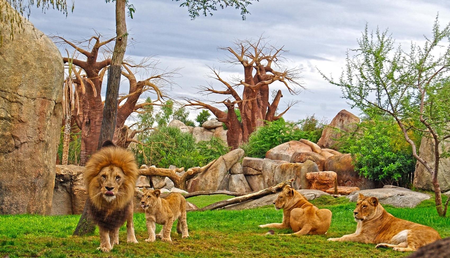 Valencia Bioparc - O grădină zoologică ecologică